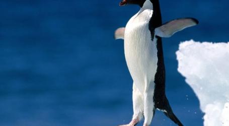 Google Büntetések – A Pingvin algoritmus